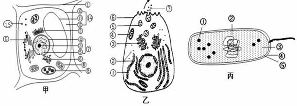 下图是细胞的亚显微结构模式图,请据图回答