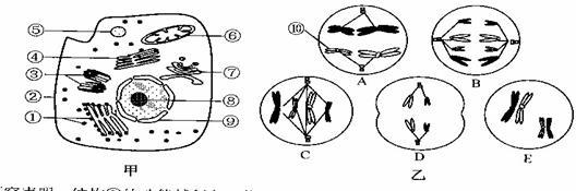 下图甲是某高等动物细胞亚显微结构示意图,图乙是该动物体内5个不同分