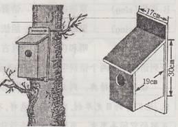 21.为了招引和保护鸟类,人们也专门给小鸟制作了屋子.
