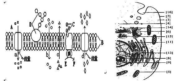 如图表示的是原核细胞中遗传信息的传递过程.下列有关