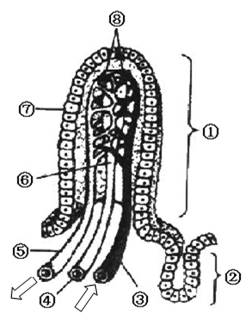 下图是小肠绒毛结构示意图.请据图分析问题:(1)①.⑥