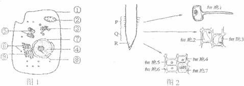 图l是高等动物细饱亚显微结构示意图,图2是某植物根尖及局部结构的