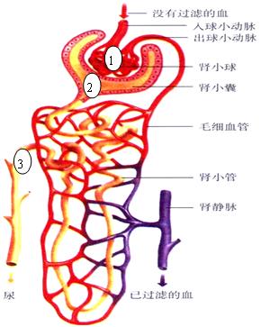 初中生物肾那部分,我老是不会咱办呐,求学霸指点一二谢谢.