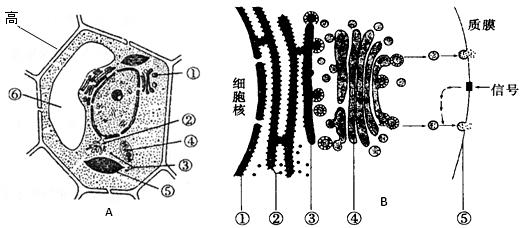 a图为某植物细胞的亚显微结构模式图,b图示某动物细胞分泌蛋白合成和