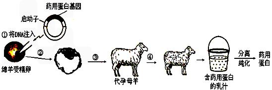 动物诊疗流程图