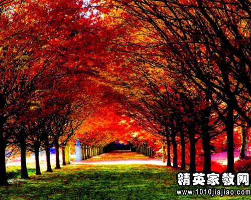 描写秋天风景的优美句子