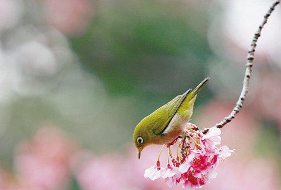 春天的唯美诗句集锦