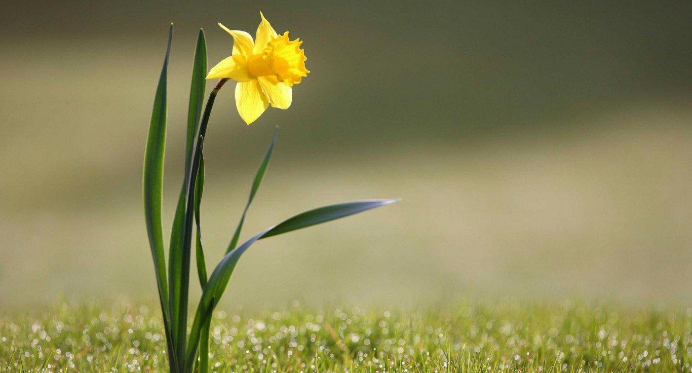 描写春天景色的成语大全