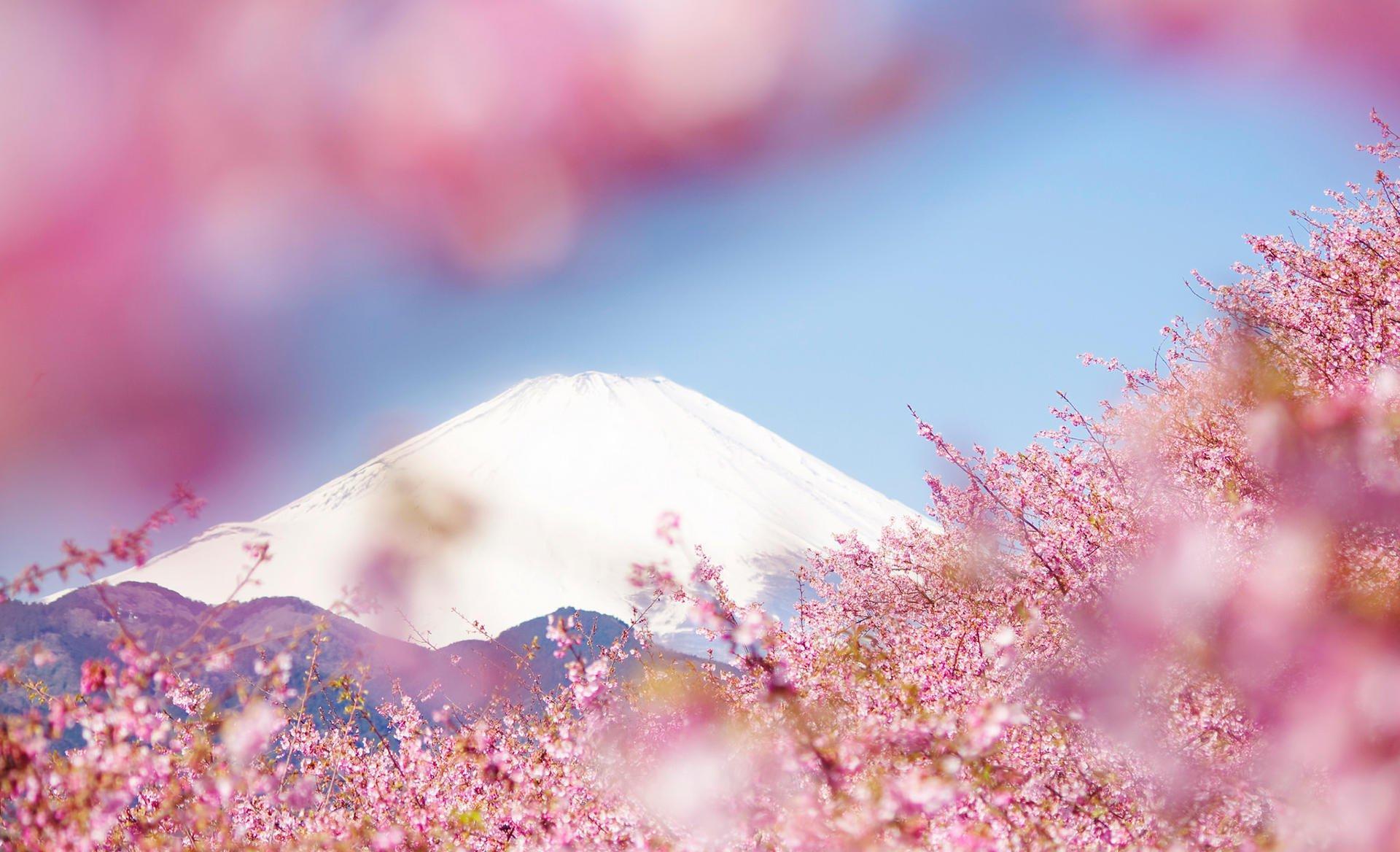 关于描写樱花的唯美句子