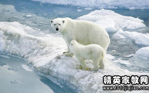 41, 拒食野生动物,维护生态平衡