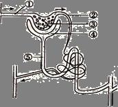 (5分)右图是肾单位结构图,请据图回答图片