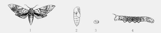 蚂蚁的发育要经过____________ ,__________ ,
