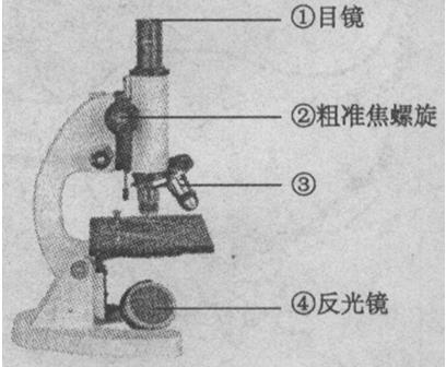 使用显微镜的基本步骤:(1)______;(2)______;(3)______;(4)______;(5)