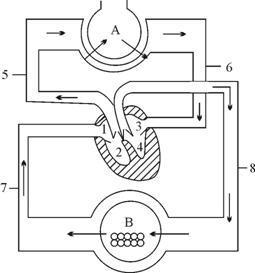 4.右图是人体血液循环示意图,请据图回答下列问题:(8分)图片