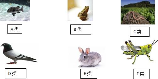 (4)e类动物所特有的生殖发育特点是胎生哺乳.