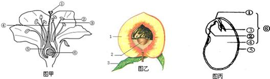 15.如图是花,果实,种子的结构图,请根据图回答