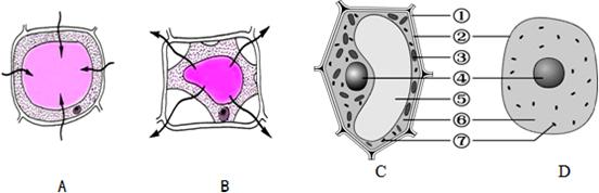 10.如图是细胞吸水和失水模式图及细胞结构模式图.请回答下列问题