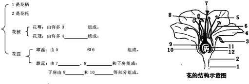 20.如图是花的结构示意图,请完成花的结构花蕊名称.