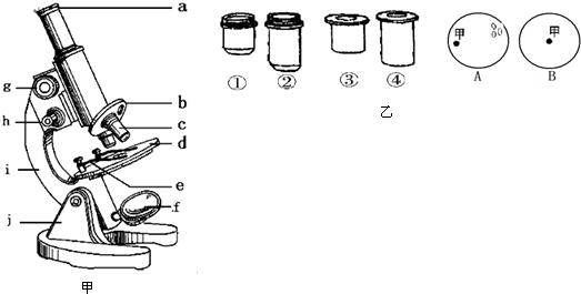 (1)填出下列序号所示的名称.a目镜、f反光镜、c物镜、g粗准焦螺旋. (2)当视野中已经看到物像,但不太清晰,此时应该调节细准焦螺旋. (3)位于视野右上方的物像,应将装片向右上方移动就能将观察到的物像移到视野中央:在显微镜下观察到一个气泡,判定它是气泡的理由是受挤压会移动,边缘有一圈黑色,无细胞核. (4)图乙是显微镜的目镜、物镜.使用上述物镜和目镜观察洋葱鳞片叶时,为使视野中观察到的细胞数目最多,其目镜和物镜的组合是 (5)A、B为显微镜观察到的两个视野,其中甲为主要观察对象,当由视野A变为视野