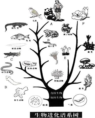 (1)写出图中字母所代表的生物类群名称: a哺乳类,b两栖类,c节肢动物,d