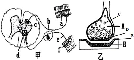图甲是反射弧的结构模式图,乙是甲图中某一结构的亚显微结构模式图.