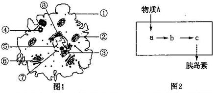 (3)图l细胞与洋葱根尖分生区细胞相比:图1细胞特有的结构是[④],该