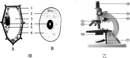 19.别为分如图结构细胞和显微镜炸酱示意图,请据图回答面的文章初中生关于结构图片