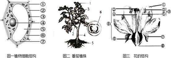 请结合下列三幅与植物有关的结构图分析并回答下列问题
