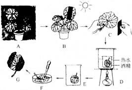 金蝉脱壳 中的 壳 指的是蝉的 A.表皮B.皮肤C.外骨骼D.内骨骼 题目和参考答案 精英家教网