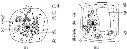 14.如图是两种生活状态细胞的亚显微结构示意图.