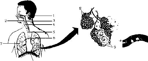 雌蕊中将来发育成果实的部位是( )a.子房b.胚珠c.子房