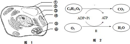 图1为高等植物细胞的亚显微结构示意图,图2为有氧呼吸过程简图.