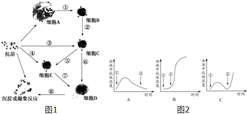 (1)图1所示免疫方式是体液免疫,不能识别抗原的是图中D细胞.-噬菌体