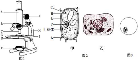 10×,10× (4)在观察洋葱表皮细胞的实验中下列说法正确的是c.