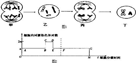 如图为某高等动物细胞分裂图象及细胞内同源染色体对数的变化曲线,据