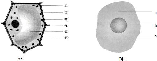 线粒体结构图简单