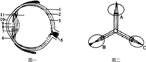 图一是眼球的结构示意图.据图回答