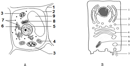 a图为某细胞的亚显微结构模式图,b图示某动物细胞分泌蛋白合成和分泌