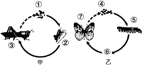 蜻蜓生长过程步骤
