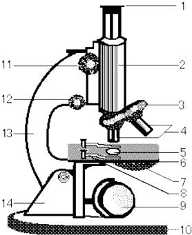 (4)使用显微镜的步骤取镜和安放,对光,观察标本,整理与存放.