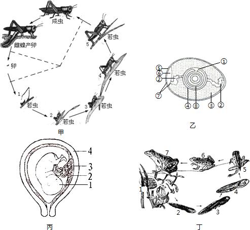 请根据蝗虫的结构示意图回答下列问题 1 蝗虫的身体分为三 部分 和 2 是气体进出 蝗虫身体的门户