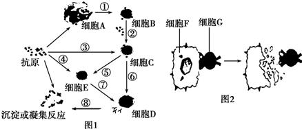 (1)图1表示体液免疫,图2表示细胞免疫.-下列关于测交的说法正确的是