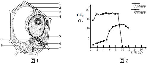 3.图1是高等植物细胞亚显微结构模式图.据图回答.([]内填图中标号,.