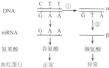 基因突变通常发生在DNA RNA的过程中 精英家教网