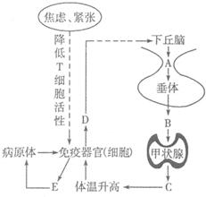 微生物培养与分离技术是技术中重要的编程生物单片机实验步骤图片