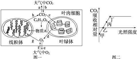 植物细胞二合一亚显微结构模式图.根据