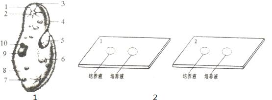 9.如图1是草履虫结构图,读图完成填空.