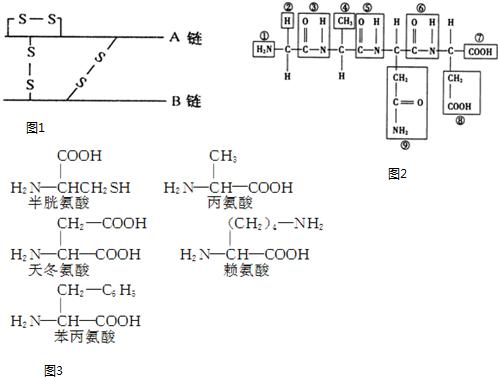 蛋白质的结构和功能千差万别的原因是氨基酸的种类,数目,排序,多肽链