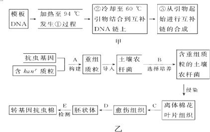 """如乙图中的""""抗虫基因""""是利用甲图中的方法获取的,该方法称为pcr技术."""