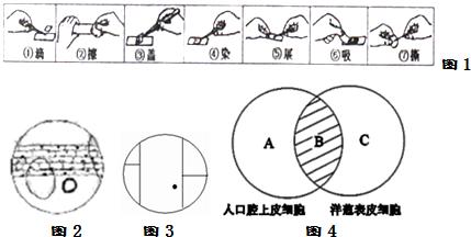 某同学利用显微镜观察洋葱鳞片叶表皮细胞,请根据她的实验过程回答